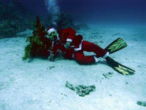 Новогоднее дайвинг сафари из Минска с клубом «Морской Пегас» - Египет