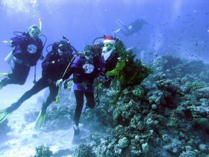 Дайвинг туры на Новый Год из Минска с дайвинг клубом «Морской Пегас»